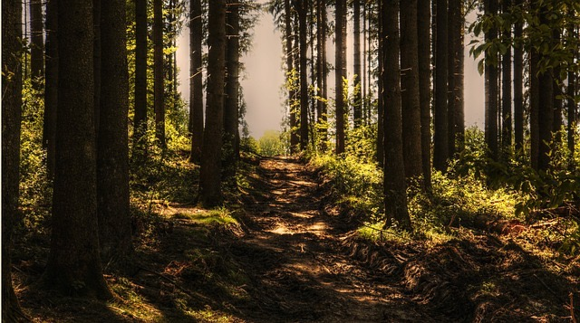 Forest Bathing questa nuova moda del Wellness Lifestyle